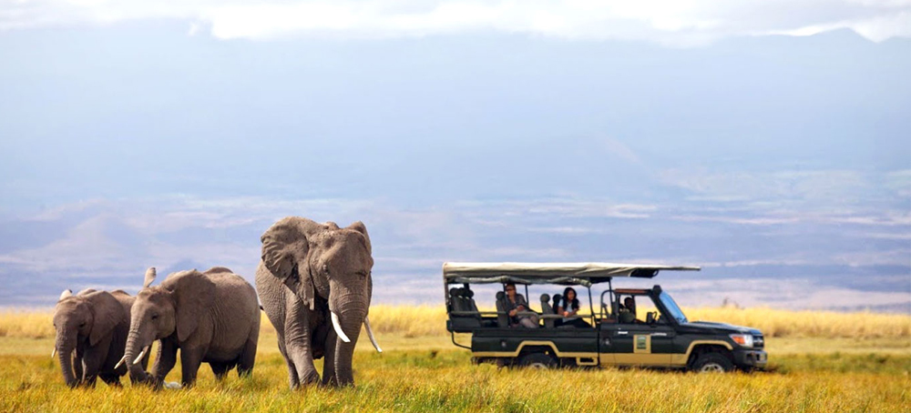 African safari tour packages from india